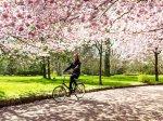 rowerem wśród kwiatów
