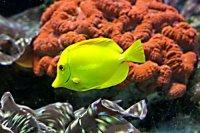 gatunki ryb